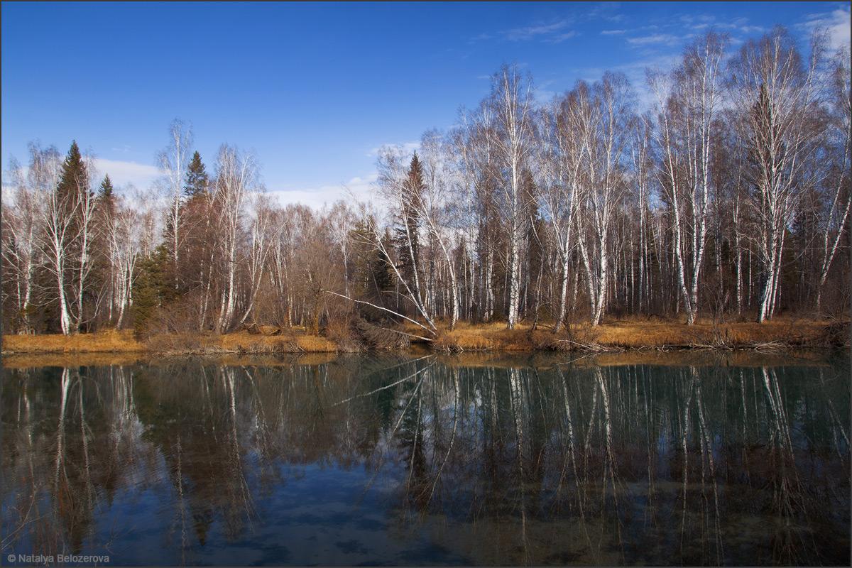Протока Катуни близ села Мульта