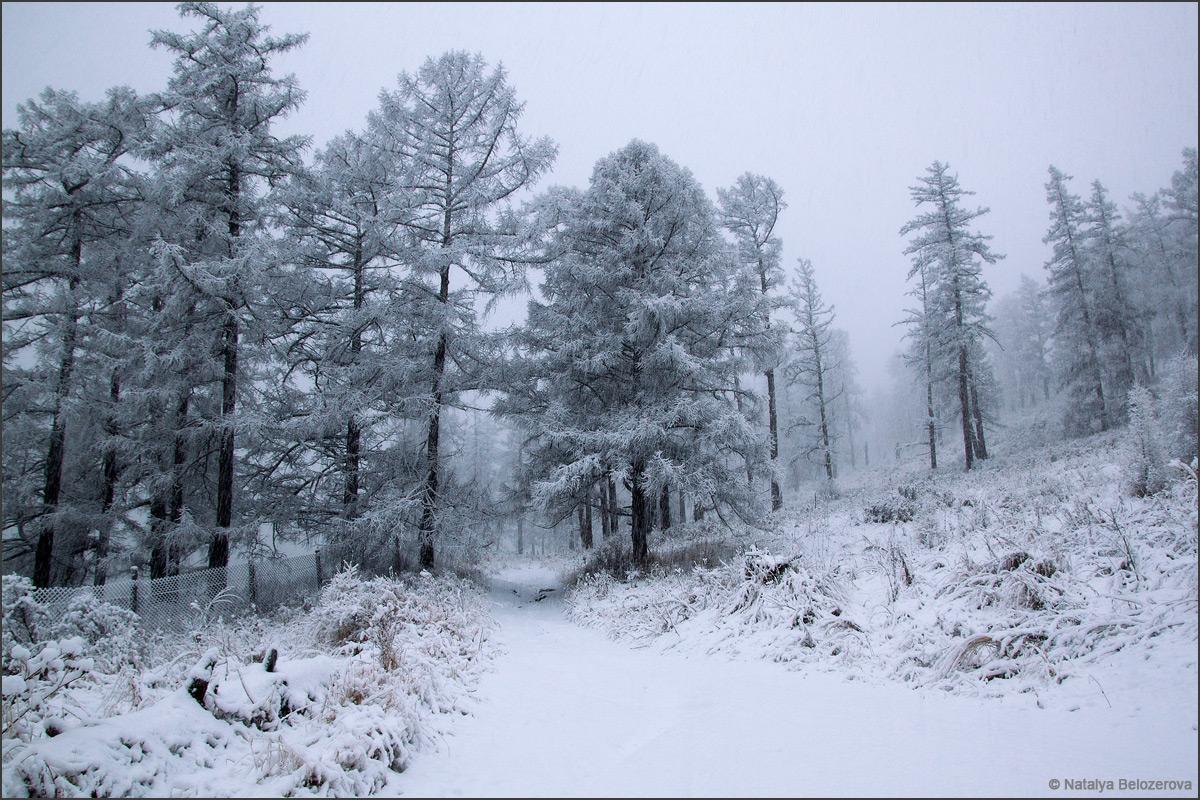 Снежный Мультинский лес по пути к озеру