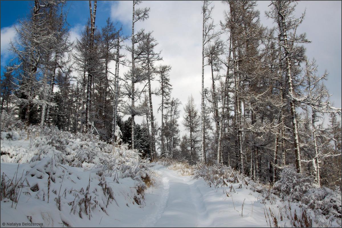 Дорога по лесу в долине Мульты