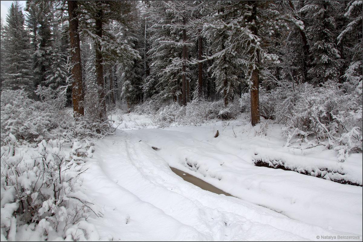 Дорога в долине Мульты