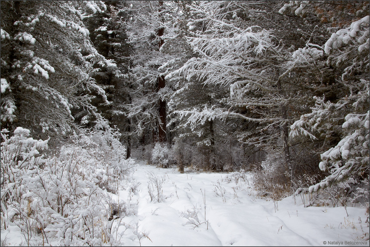 Снежный Мультинский лес пути к озерам