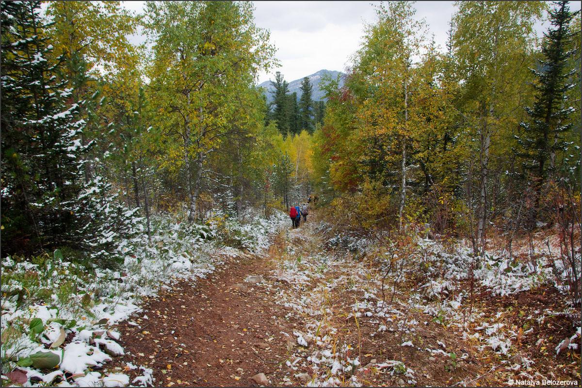 Лесовозная дорога в долине Карабель