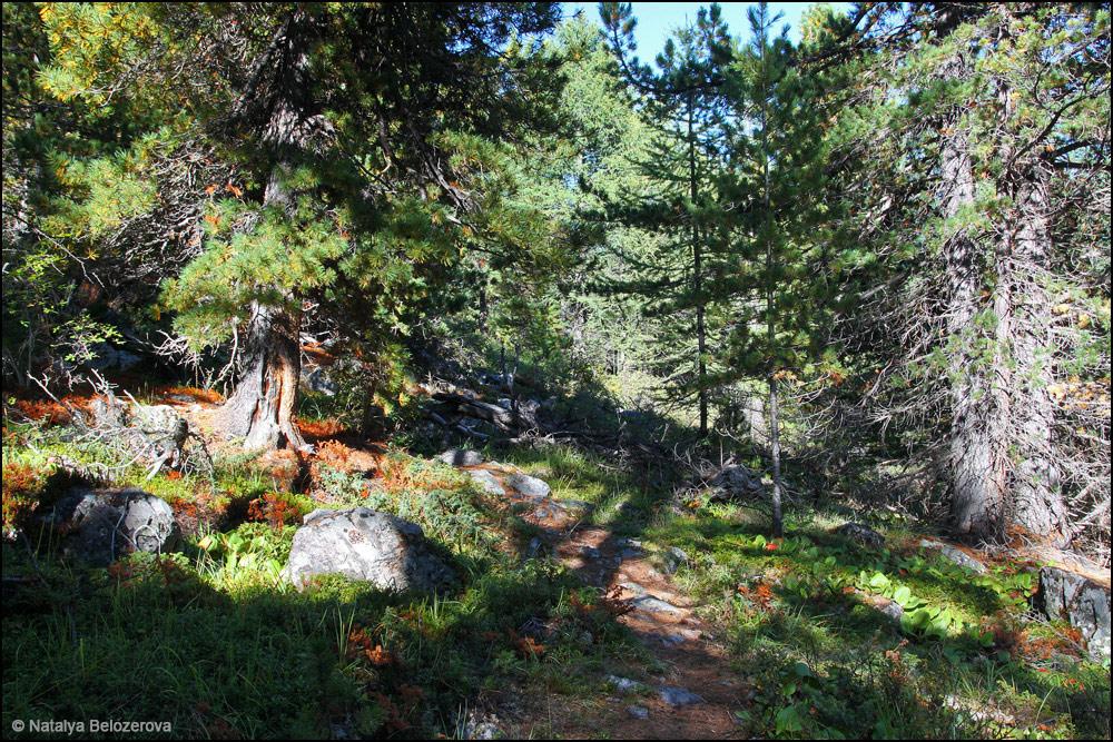 Долина Каракабак в лесной зоне