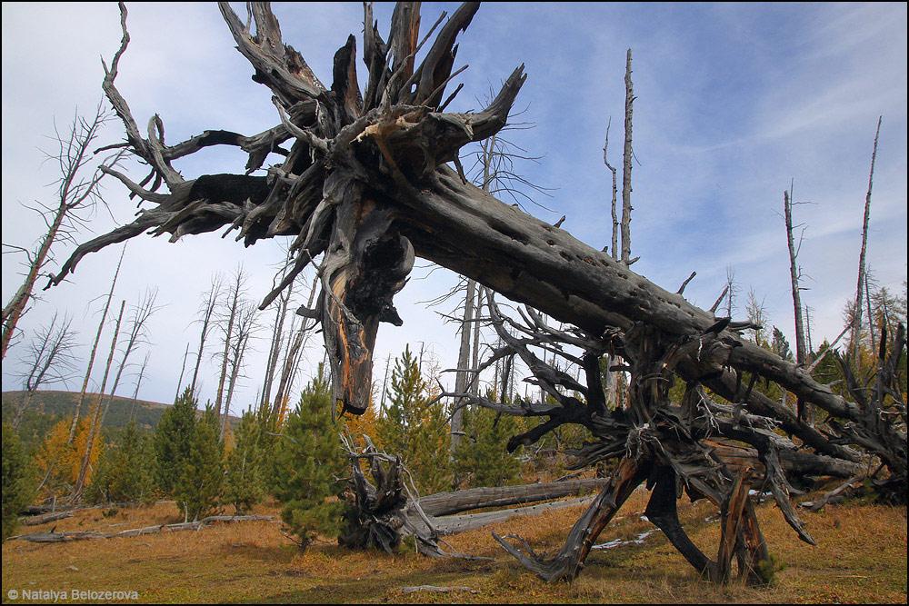 Горелый лес под склонами Байды