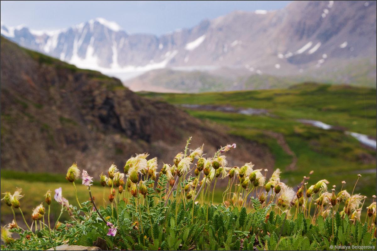 Дриады на фоне ледника Джело