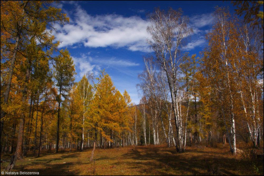 Лес у села Тюнгур